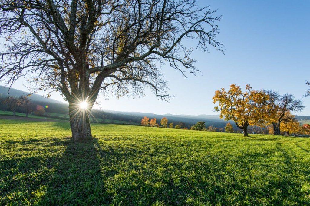 Landschaft, Bäume und Sonne, © Helmut Schweighofer