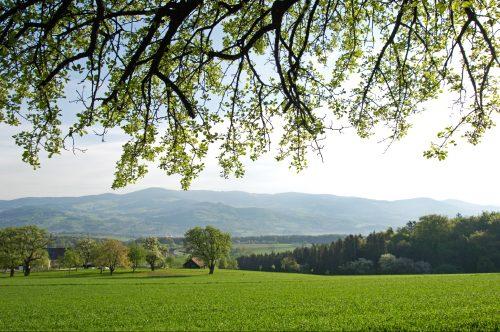 Landschaft Naturpark Pöllauer Tal