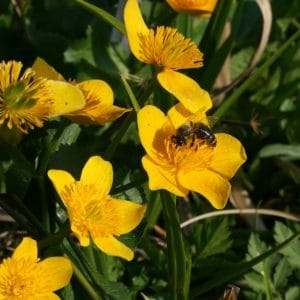 Bienenlehrpfad ©TV Naturpark Poellauer Tal
