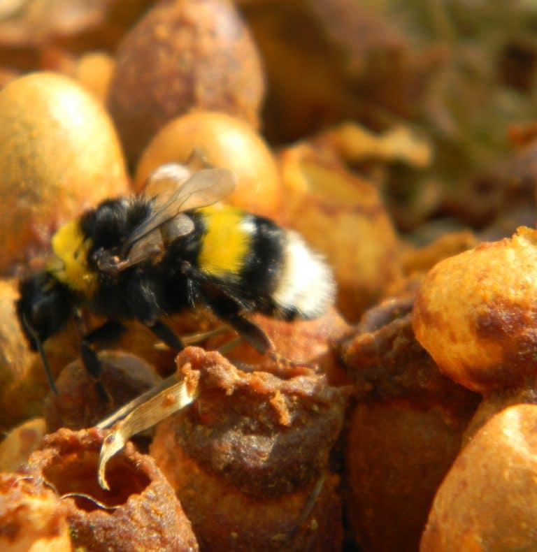 Bienenlehrpfad © Franz Grabenhofer