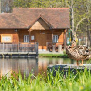 Aupark, © Helmut Schweighofer