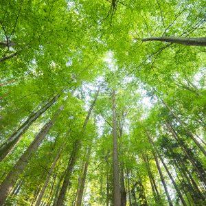 Wald ©Helmut Schweighofer