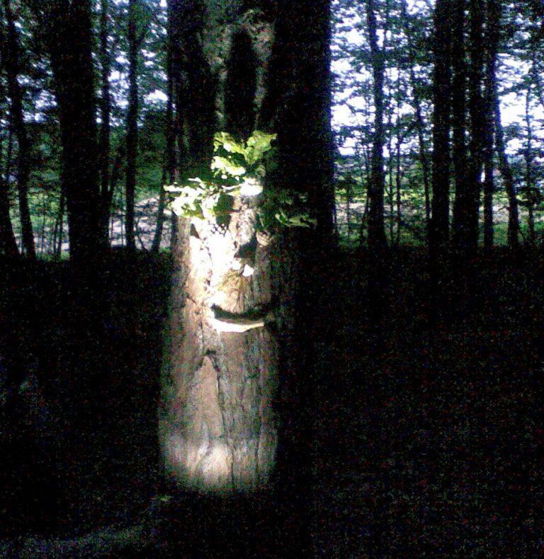 Nachtwanderung ©Hermine Muhr