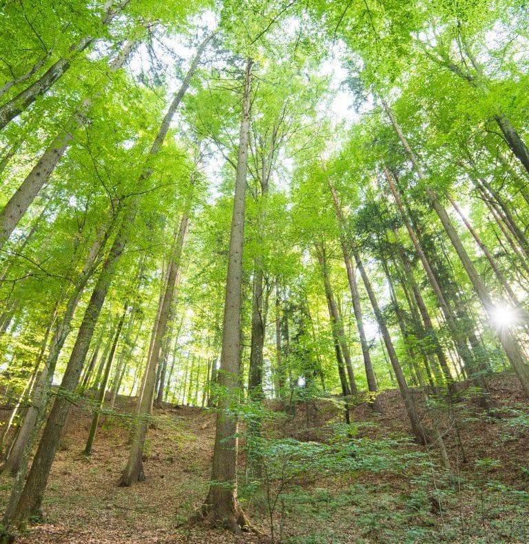 Waldforschertag ©Helmut Schweighofer