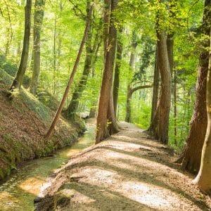 Neu_Entspannter Waldaufenthalt ©Helmut Schweighofer